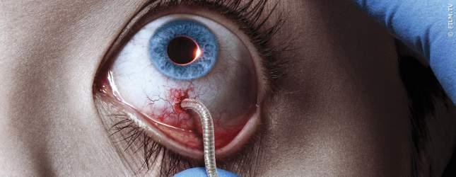 Über Würmer überträgt sich diese Vampirinfektion und rafft die Menschheit dahin.