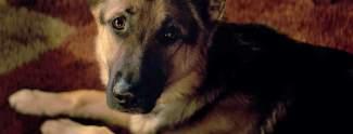 Bailey: Tierschützer stoppen Filmpremiere