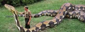 5 Tiere Die ihre Trainer umgebracht haben