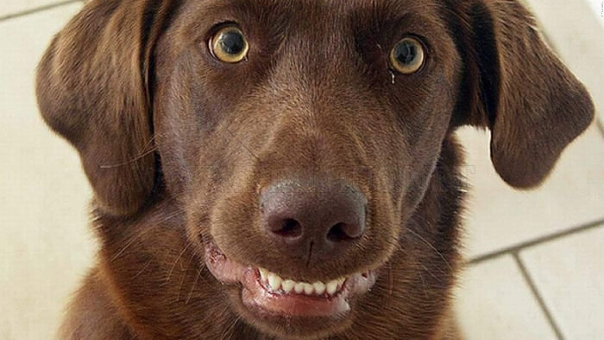 VIDEO: Hund frisst Joint - total bekiffter Hund