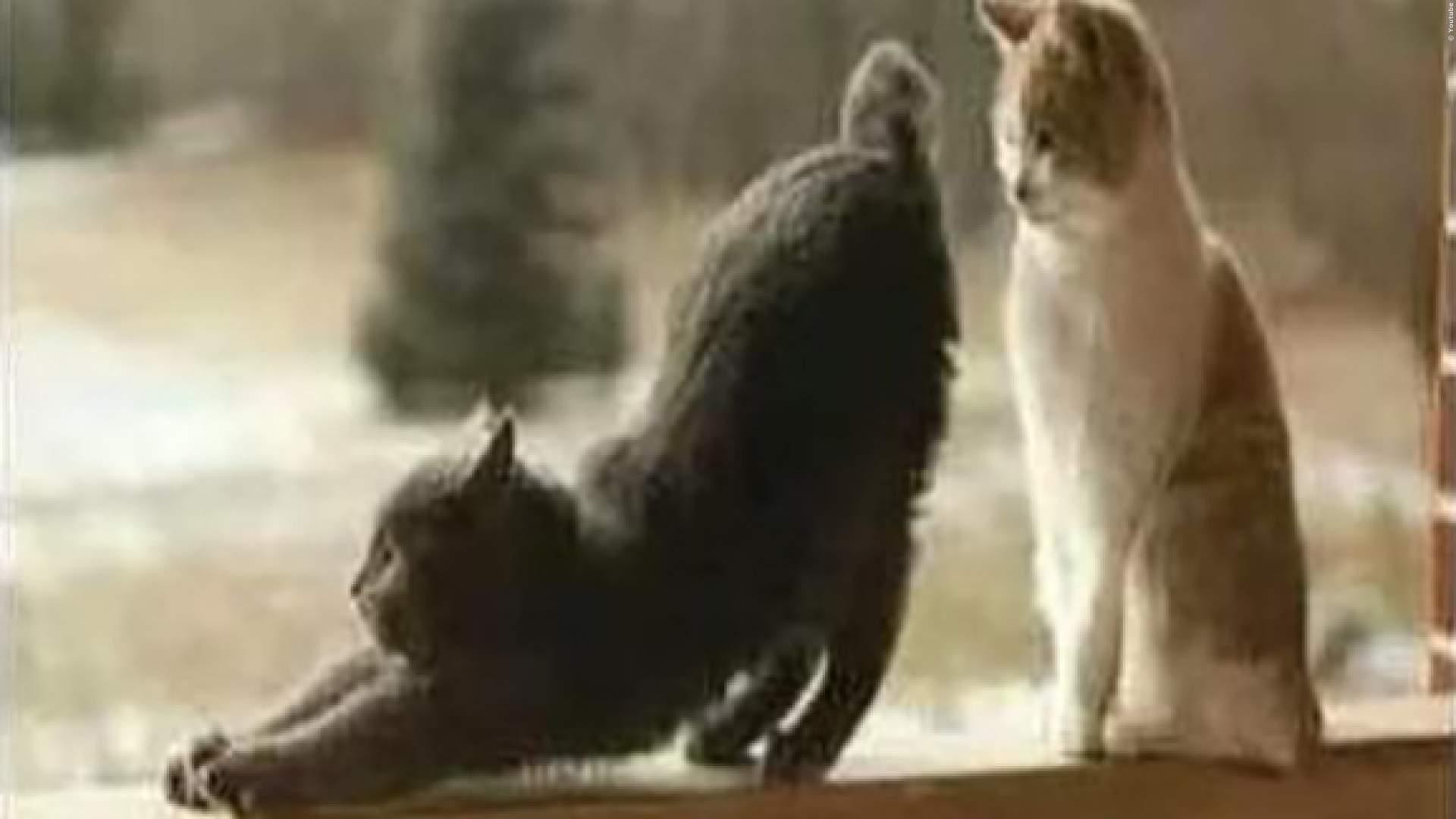 VIDEO: Lustige Tiere furzen - Wer schafft es nicht zu lachen?