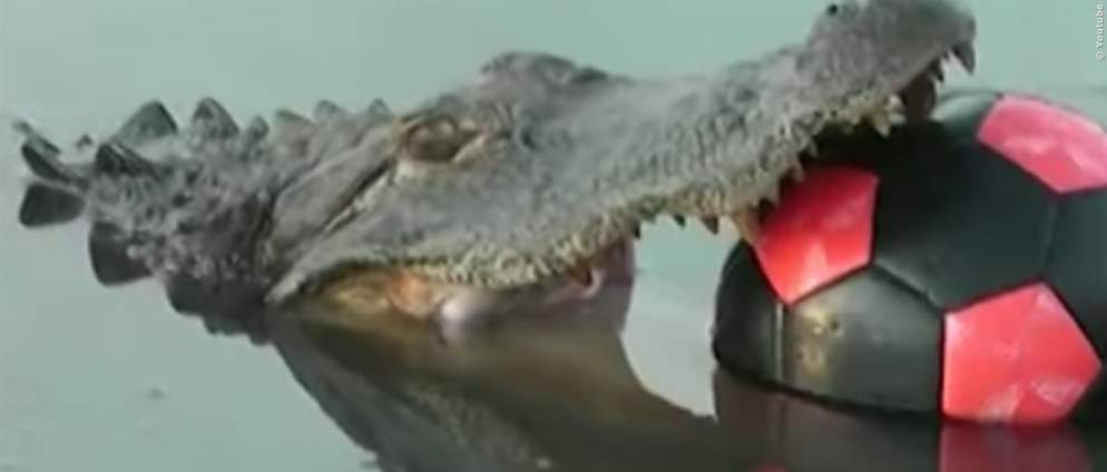 Video: Streich mit falschem Krokodil