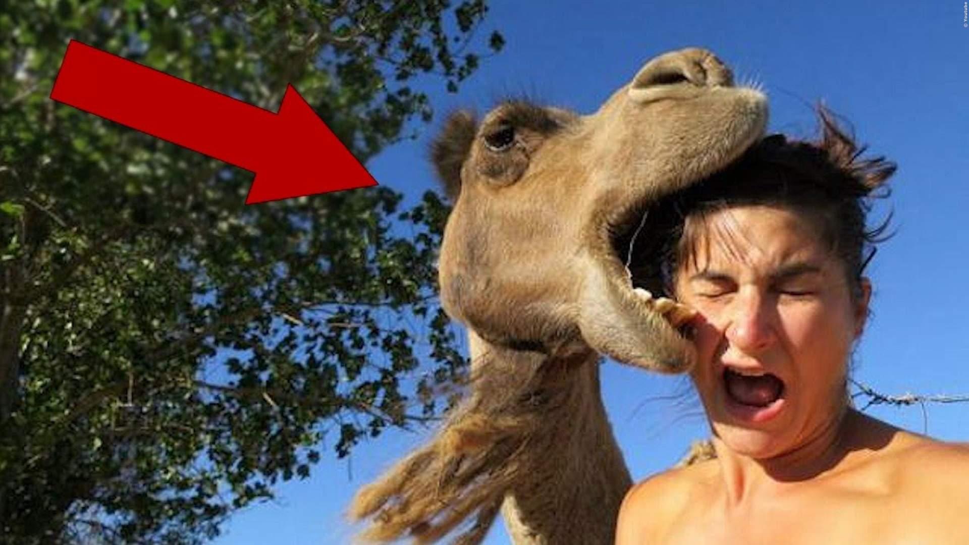 VIDEO: Tiere rächen sich an dummen Menschen - mit Recht!