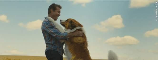 Zum Tag des Hundes: Filmtipp für die ganze Familie