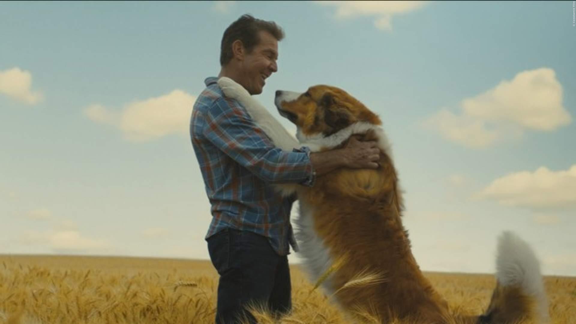 FILMTIPP: Zum 'Tag des Hundes' gibt es einen ganz besonderen Vierbeiner