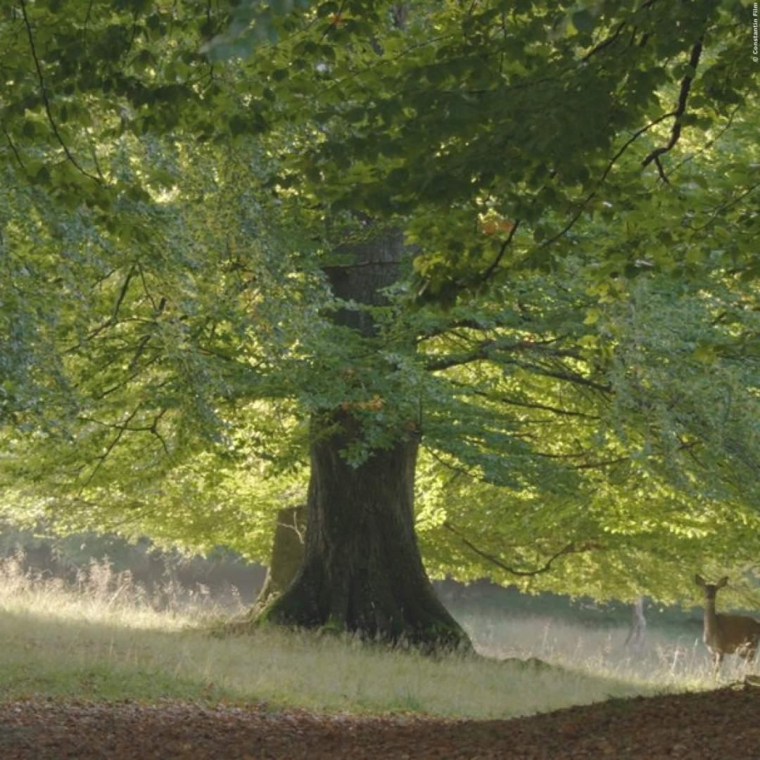 VIDEO: Das Geheime Leben Der Bäume - Mutterbäume 'stillen' ihre Ableger