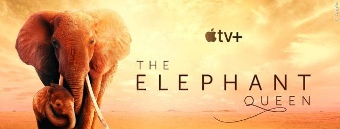 The Elephant Queen