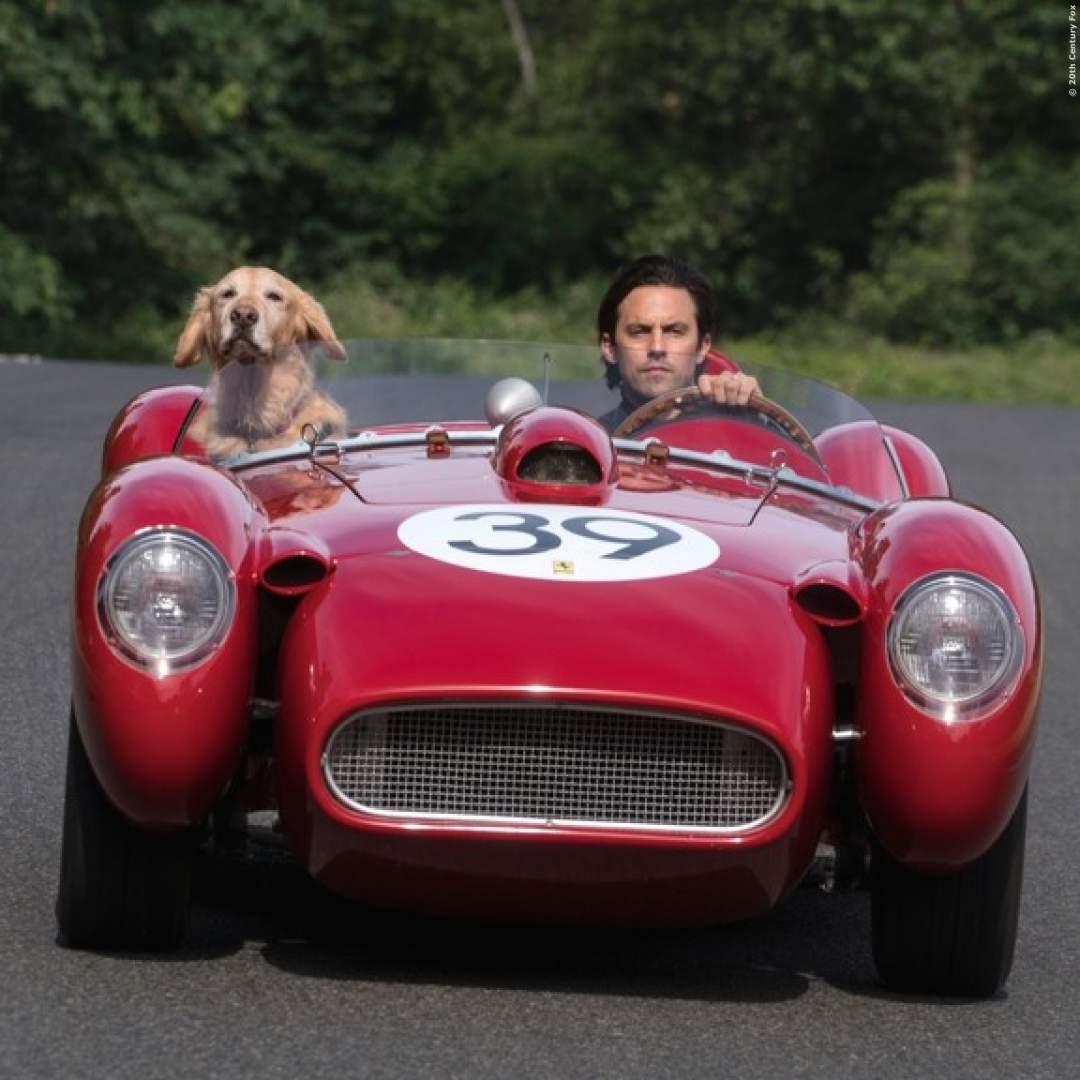 TIPP: Dieser neue Film-Hund berührt dich ganz tief drin - Enzo ist einfach der Hammer!