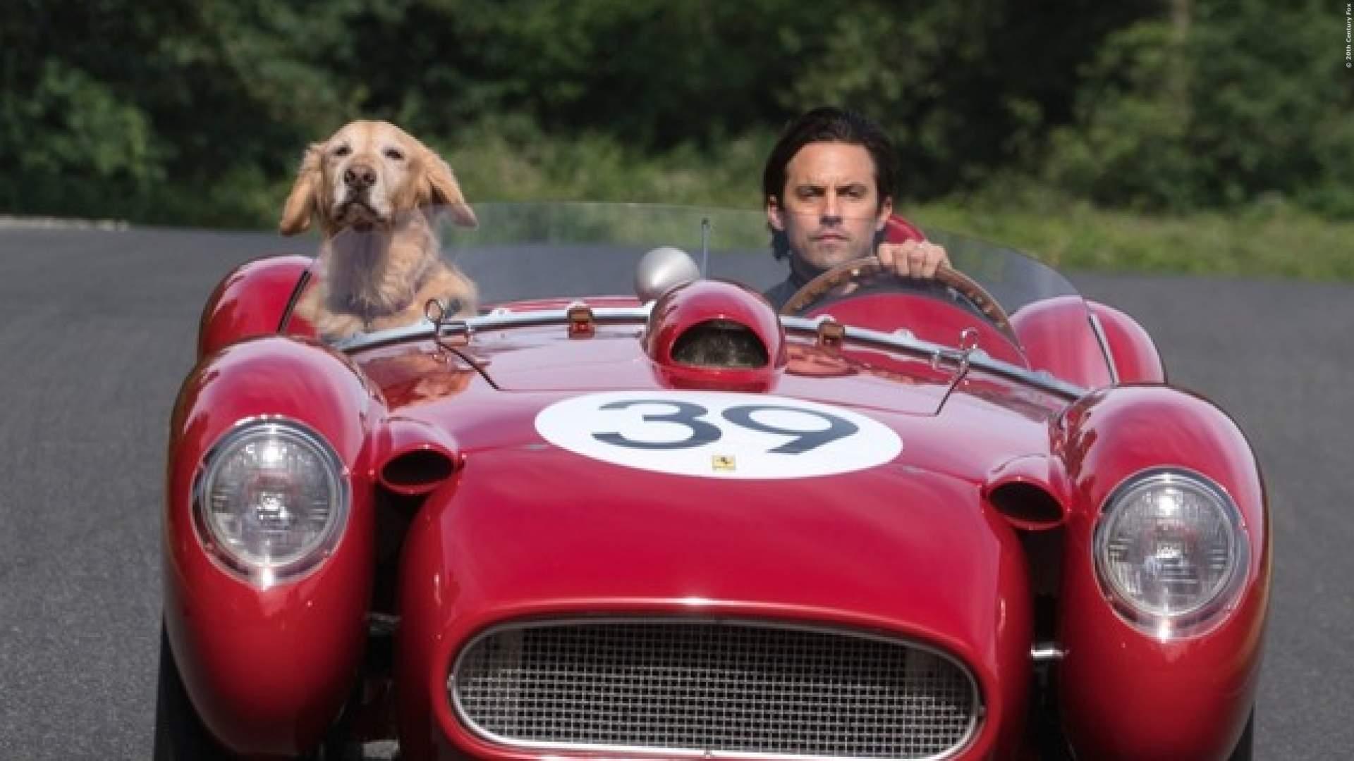 EXKLUSIV: Video-Special zum Kinofilm mit Kevin Costner als Hund