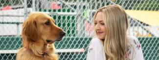Quiz: Wuff? Teste jetzt dein Hundewissen