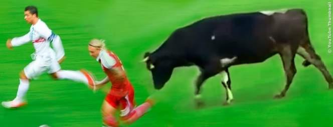 Tiere, die ein Fußballspiel unterbrochen haben