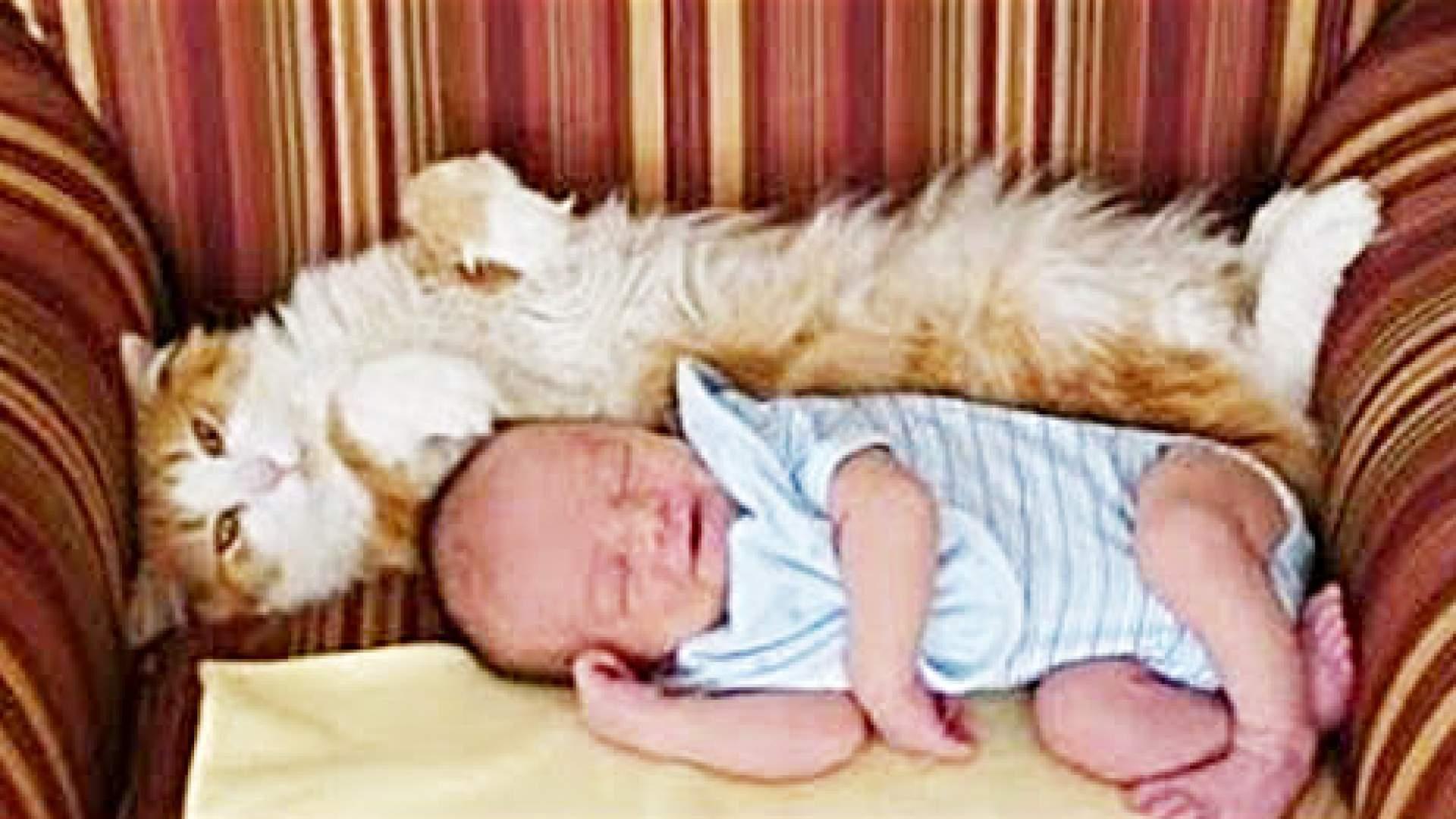 VIDEO: Wenn Katzen zum ersten Mal auf neugeborene Babys treffen - Lustig und süß!