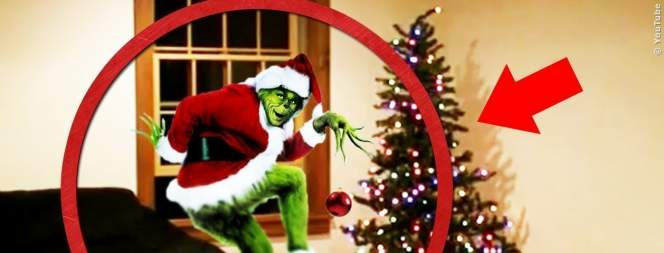 Echte Grinch, die an Weihnachten gefilmt wurden