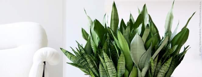 Zimmerpflanzen als grüne Superhelden: Stress-Befreier, mit extra Boost fürs Wohlbefinden