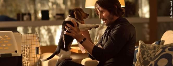 Dog Wick: John Wicks Hund ist jetzt auch ein Killer