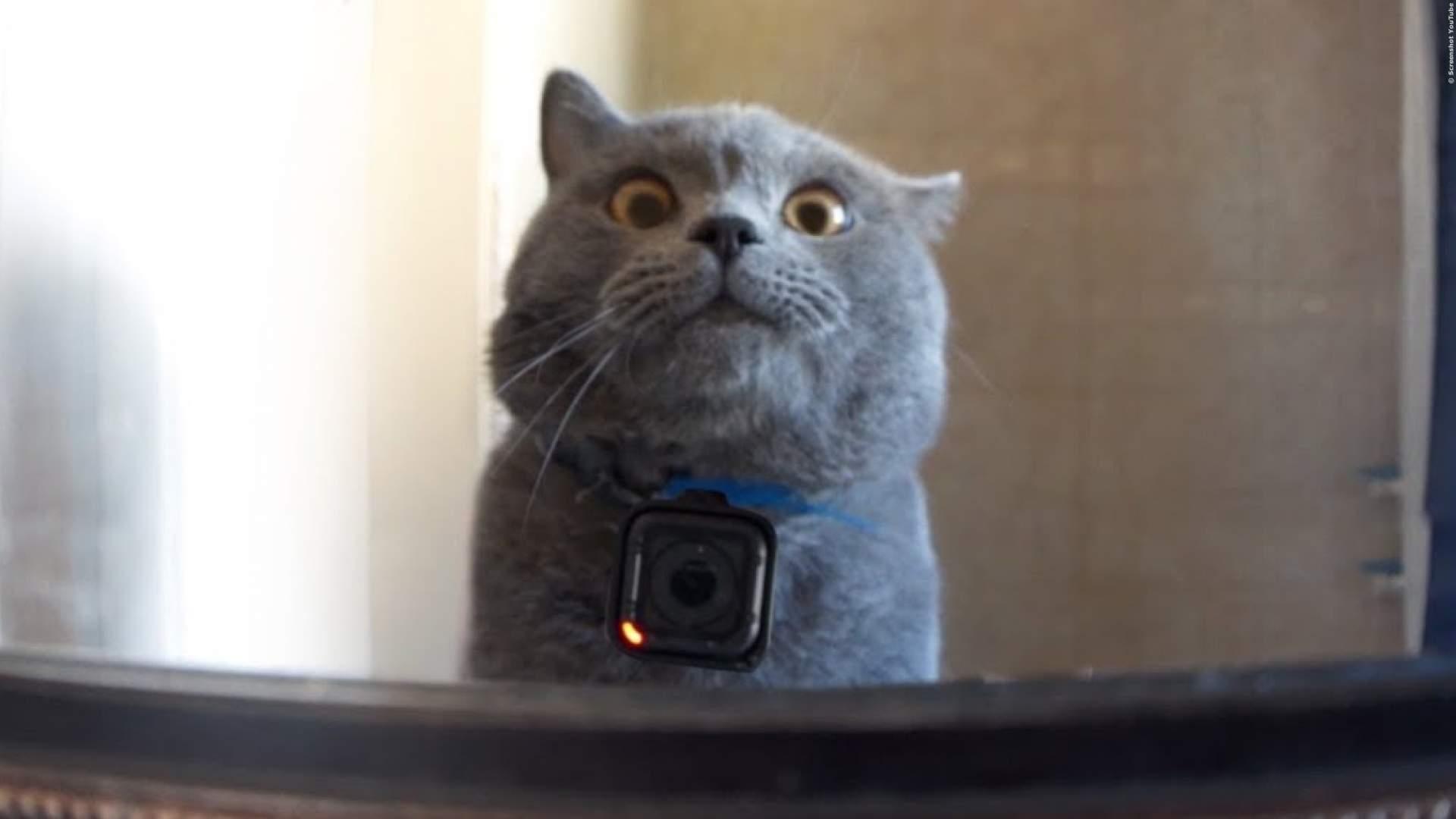 Das tun Katzen, wenn sie alleine sind - Katze mit Go-Pro-Kamera   Video