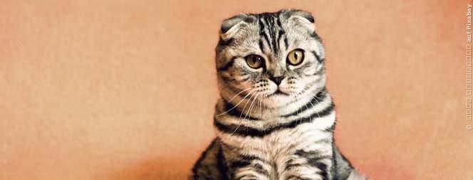 Top 5: Die beliebtesten Katzennamen in Deutschland
