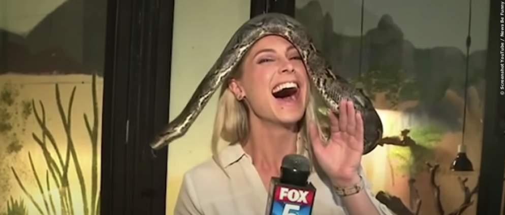 Lustige Tiere drehen im Fernsehen durch - Schlangen, Affen, Schweine ohne Bock auf Fame im Fernsehen