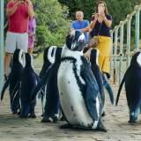 Stadt der Pinguine - Serie 2021