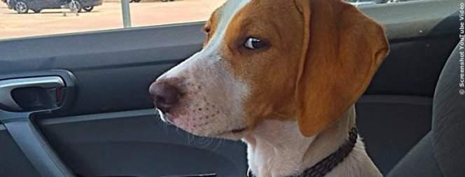 Lustige Hunde beim Tierarzt - Der Blick sagt alles