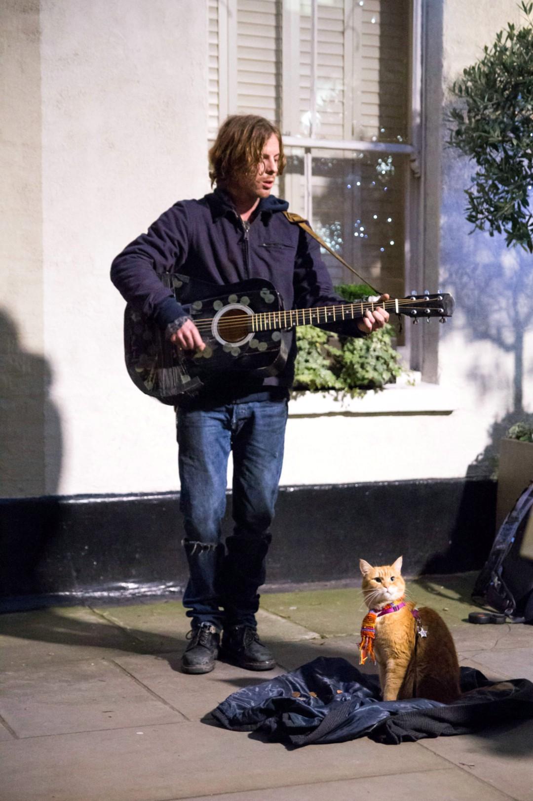 Bob Der Streuner: Straßenkatze im Kino - Bild 10 von 18