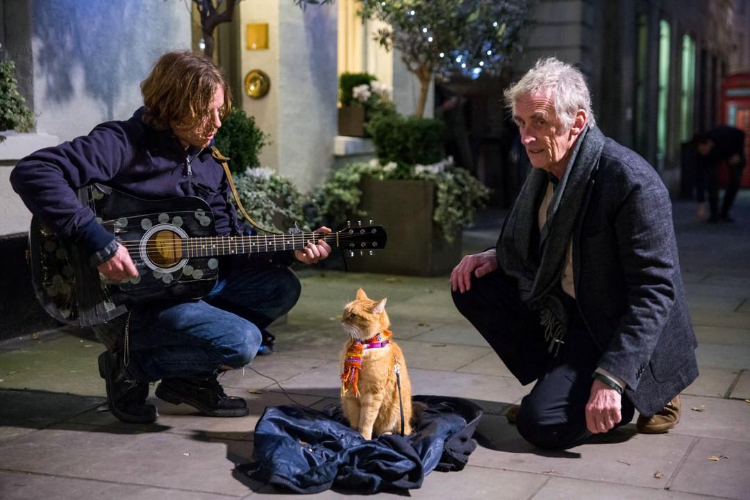 Bob Der Streuner: Straßenkatze im Kino - Bild 15 von 18