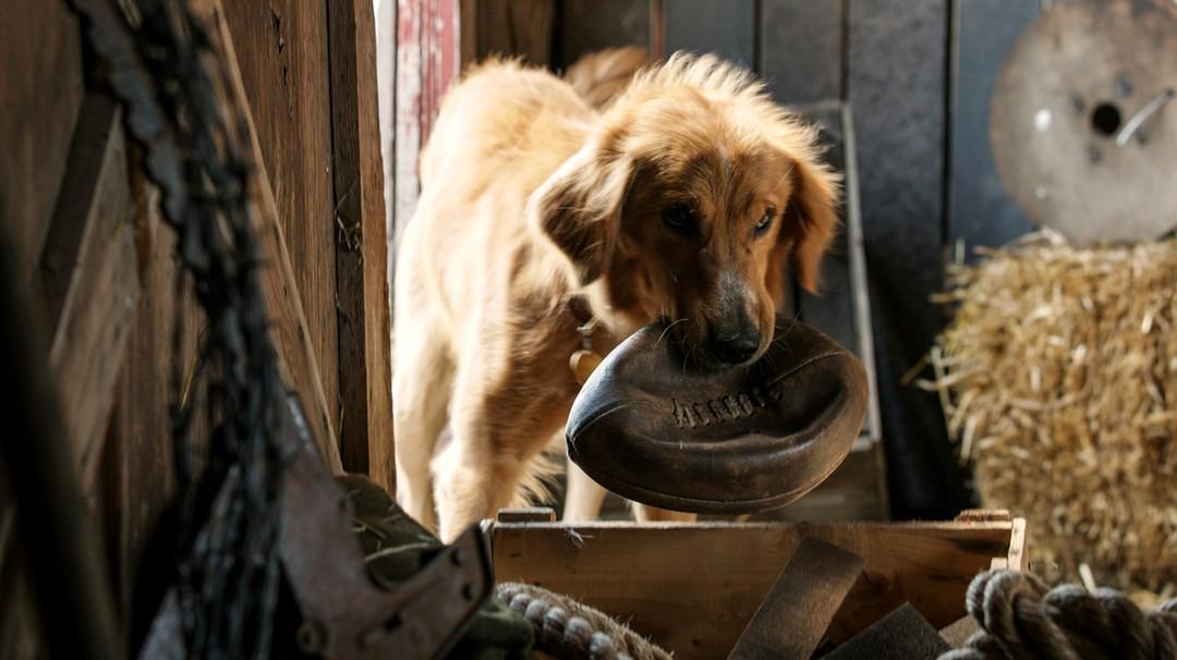 Bailey - Ein Freund Fürs Leben - Bild 14 von 16