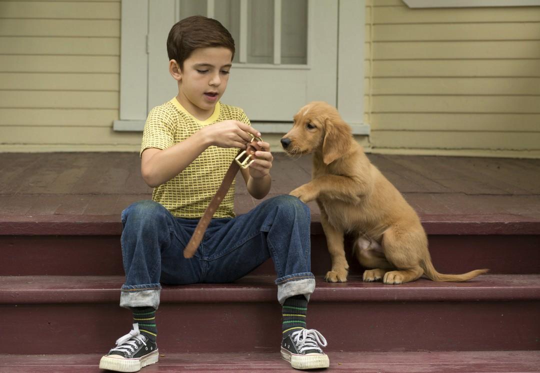 Bailey - Ein Freund Fürs Leben - Bild 8 von 16