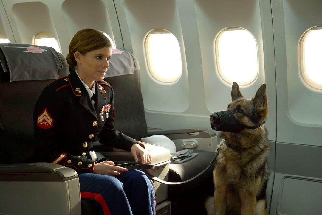 Sergeant Rex - Nicht Ohne Meinen Hund - Bild 11 von 11