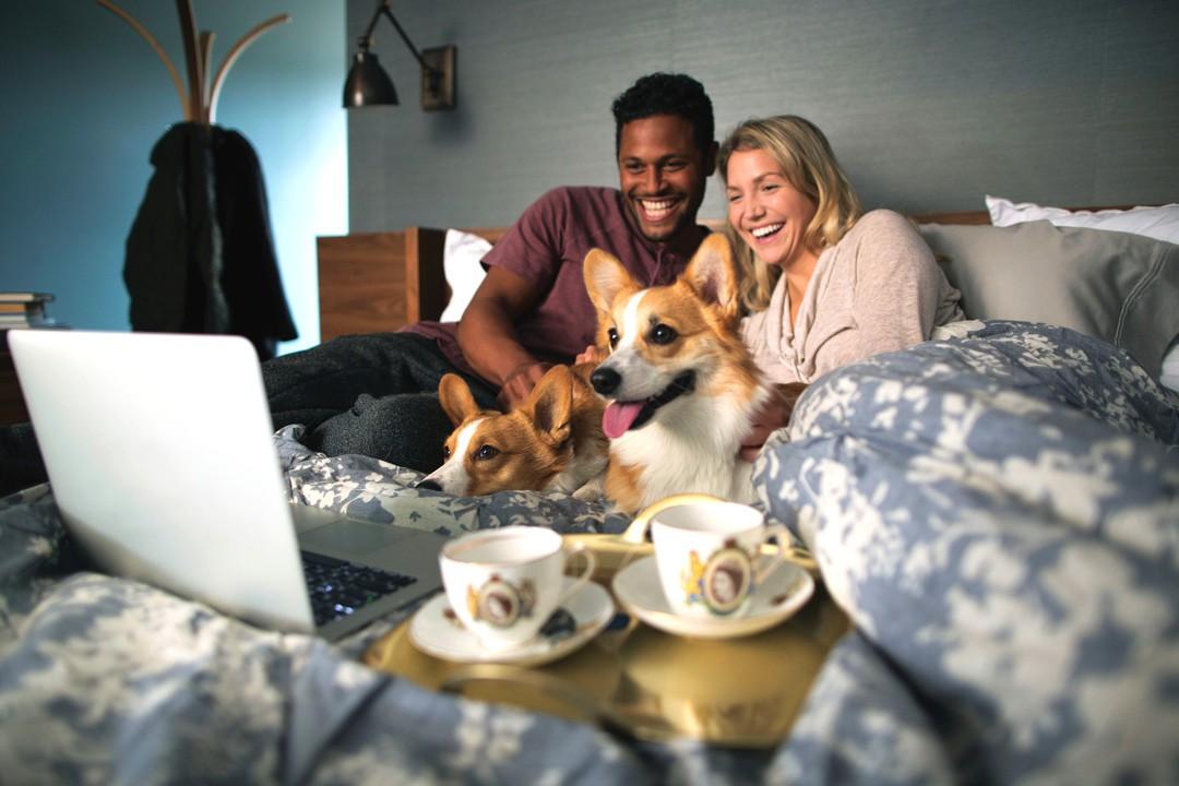Haustiere sind gute Netflix-Partner - Bild 2 von 7