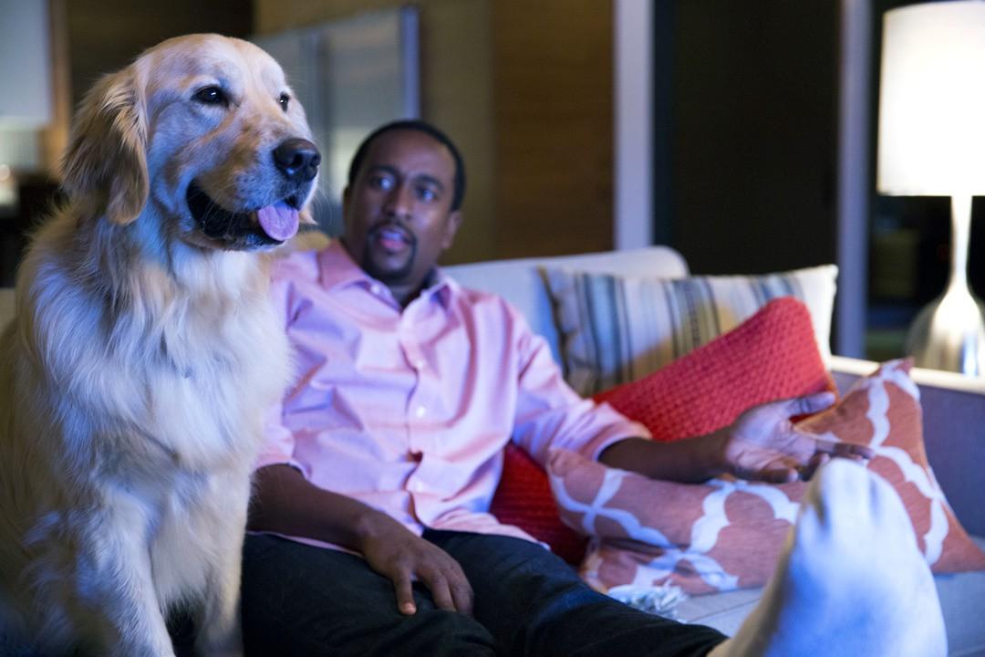 Haustiere sind gute Netflix-Partner - Bild 5 von 7