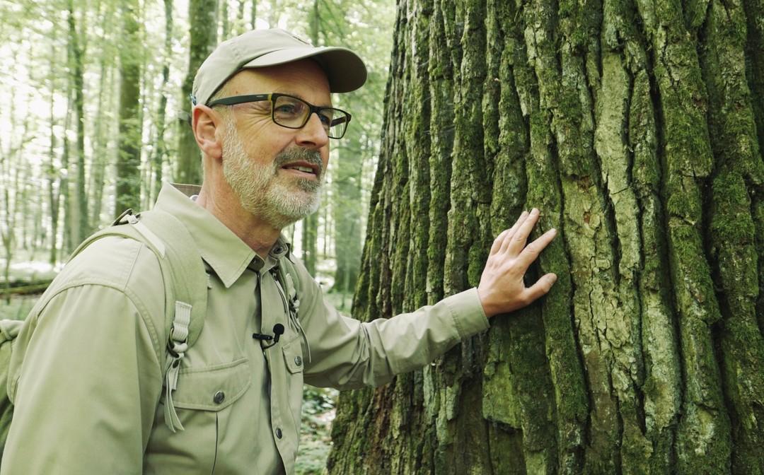 Das Geheime Leben Der Bäume Trailer - Bild 1 von 15