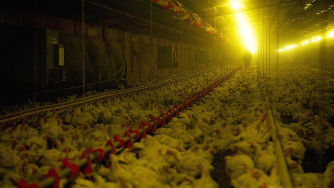 Eating Animals: Dokumentation als TV-Premiere - Bild 1 von 4