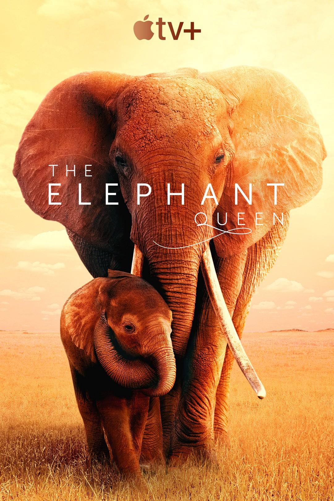 The Elephant Queen - Bild 2 von 2