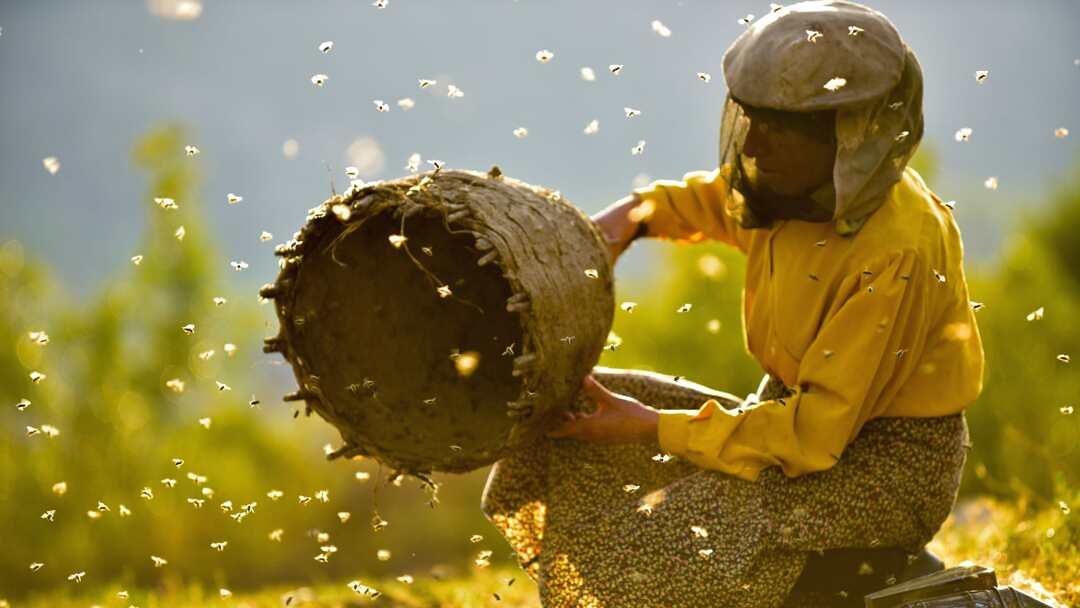 Land des Honigs - Bild 2 von 7