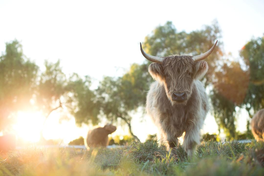 Unsere große kleine Farm Trailer - Bild 1 von 8