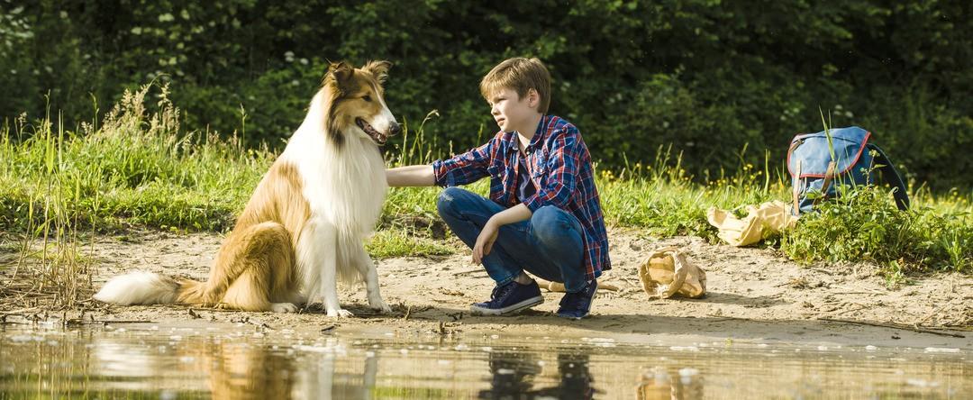 Lassie: Eine Abenteurliche Reise - Bild 2 von 12