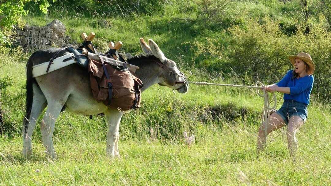 Mein Liebhaber Der Esel Und Ich Trailer - Bild 1 von 1