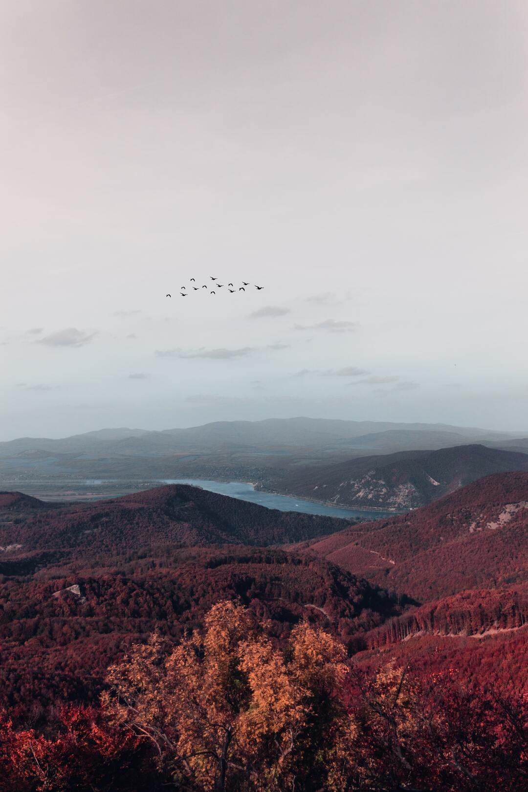 Der Wald  Zsivány-sziklák in Ungarn