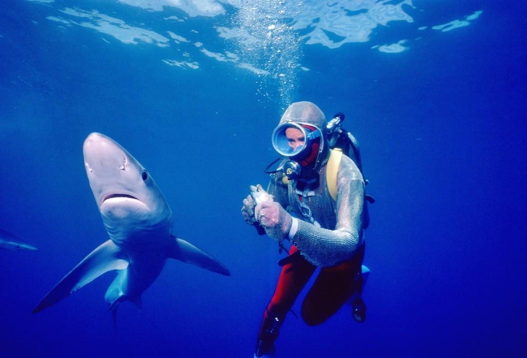 Bild zu Die Freundin der Haie
