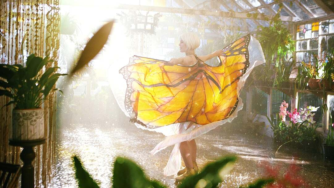 Bild zu Die Sinnlichkeit des Schmetterlings